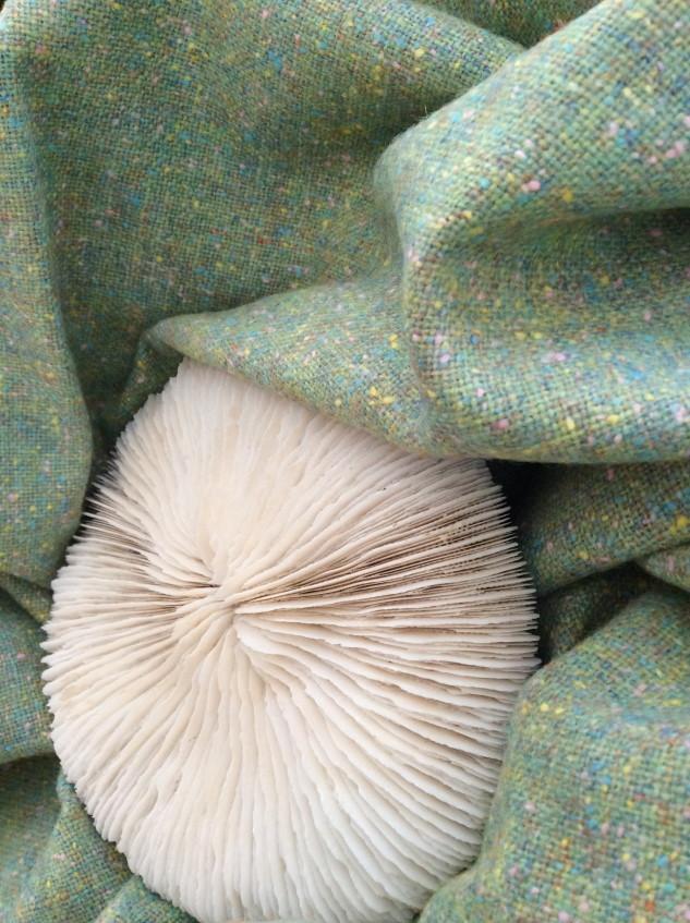 drap de laine tweed ver nénuphar